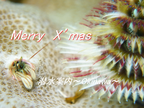 09.12.25 Merry X'mas_b0100730_1035978.jpg