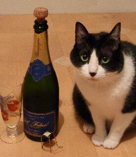 メリークリスマス猫 空のぇる編。_a0143140_957445.jpg