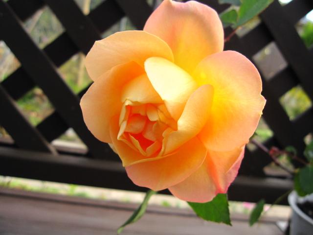 花の命は短くて_e0181373_2112629.jpg