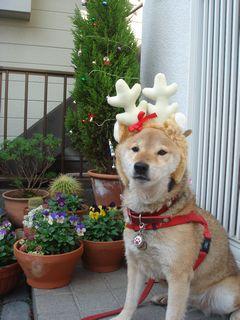 Merry X\'mas !!_e0012580_11155890.jpg