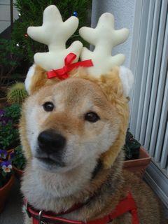 Merry X\'mas !!_e0012580_11164367.jpg