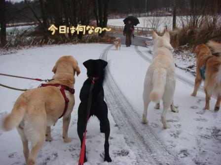 散歩散歩の一日_f0064906_18202198.jpg