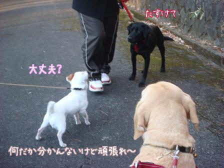 散歩散歩の一日_f0064906_19125220.jpg
