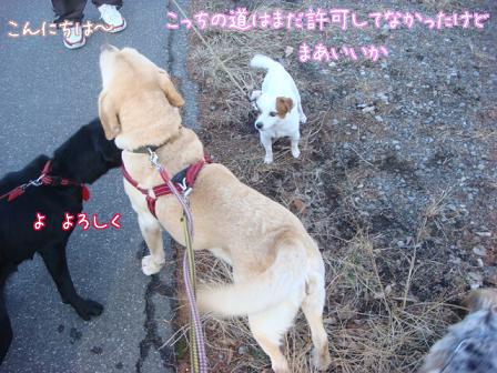 散歩散歩の一日_f0064906_1934737.jpg