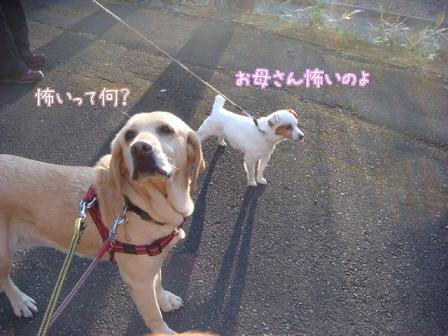 散歩散歩の一日_f0064906_1982056.jpg