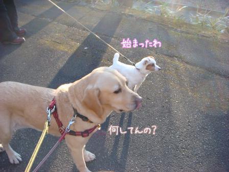 散歩散歩の一日_f0064906_1984100.jpg