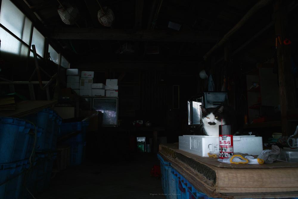 なめらかな猫のイメージ_c0065410_18591557.jpg