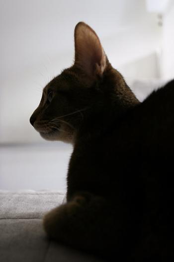 [猫的]目覚まし_e0090124_81292.jpg