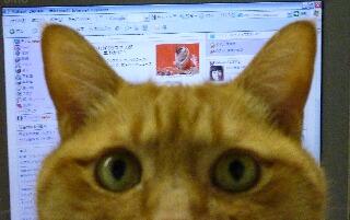 Yahoo!トップページ猫 ぽーしぇる編。_a0143140_1552879.jpg