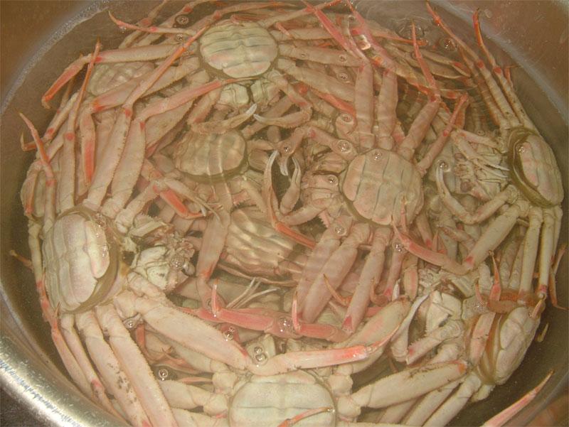 蟹に救われた一年_c0110051_9485495.jpg