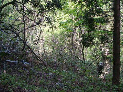 政府の林業再生プランについて_f0206159_10105018.jpg