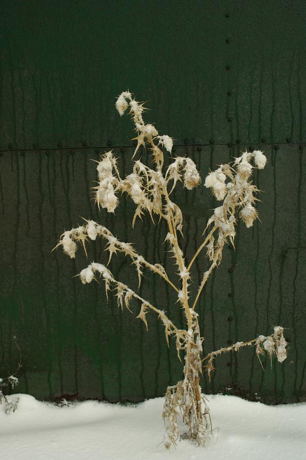 雪の埠頭に咲く_e0051186_2153477.jpg