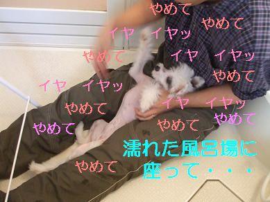 f0179203_1592839.jpg