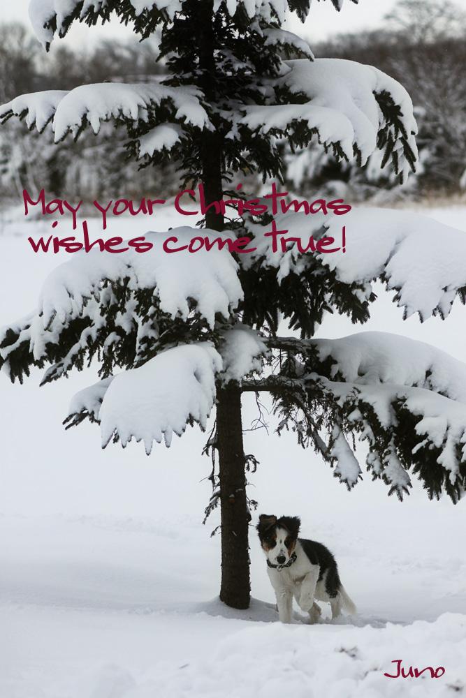 White Christmas_f0116805_22242441.jpg