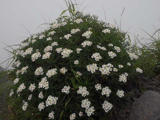 2009年8月14-16日、利尻島、礼文島周遊_c0219616_14562326.jpg