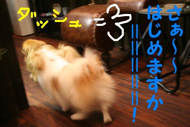 b0130018_2004917.jpg