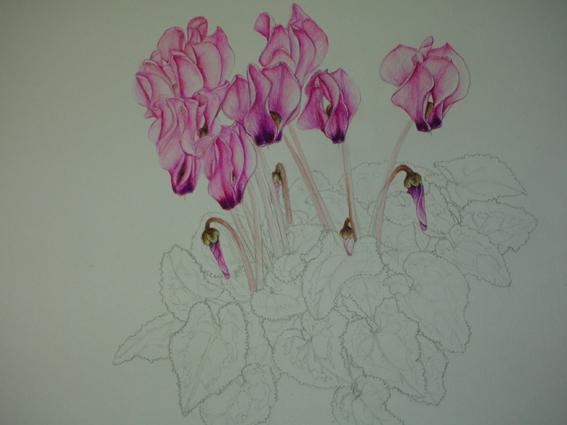 花の成長が!_c0206645_10143395.jpg