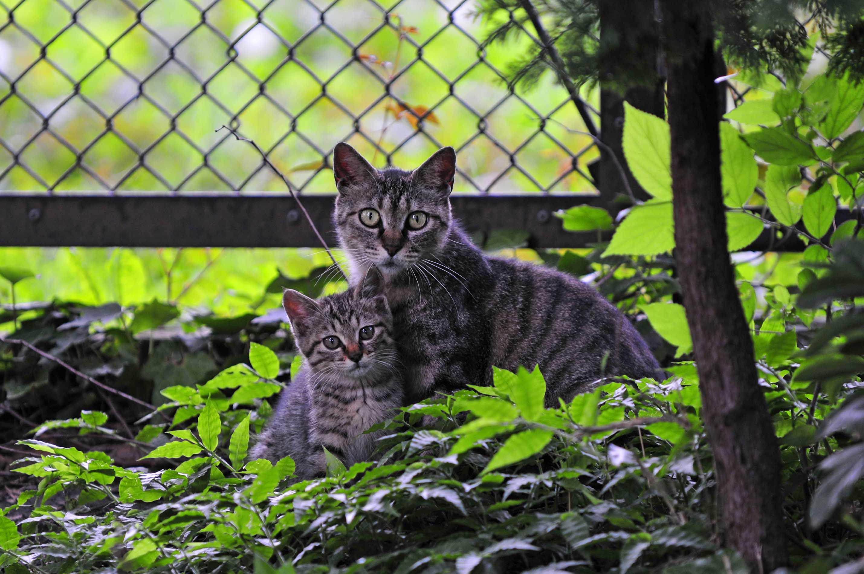 【水無月<6月>】~猫に助けられて_e0157647_17325873.jpg