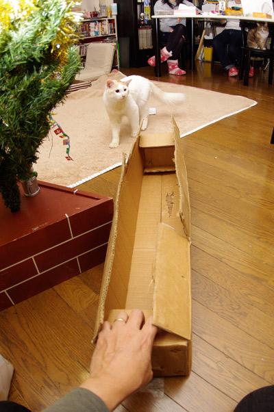クリスマスのお約束_a0028451_381681.jpg
