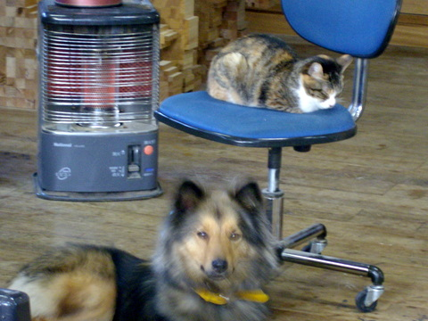 猫はストーブの前で丸くなる…犬はカメラの前でポーズをとる_f0206159_22582398.jpg