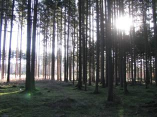 森へ_e0116763_1501830.jpg