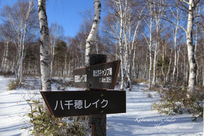 09/12/22   北八ヶ岳白樺の森_c0137403_18381977.jpg