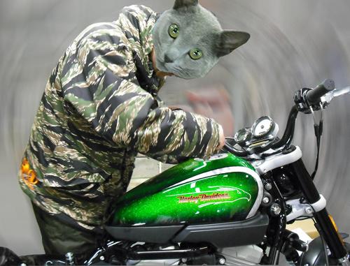 Harley Davidson XR1200X_d0130115_2252527.jpg