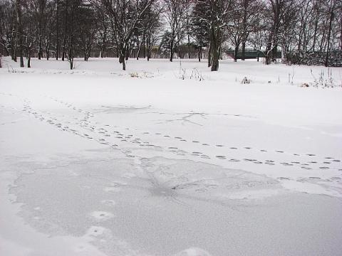 2009年12月28日(月):雪と地震_e0062415_17115661.jpg