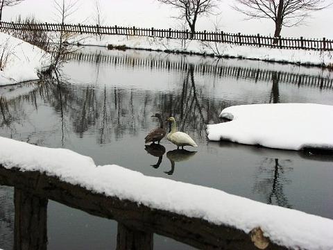 2009年12月28日(月):雪と地震_e0062415_17122086.jpg