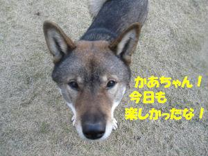 f0143123_20114737.jpg