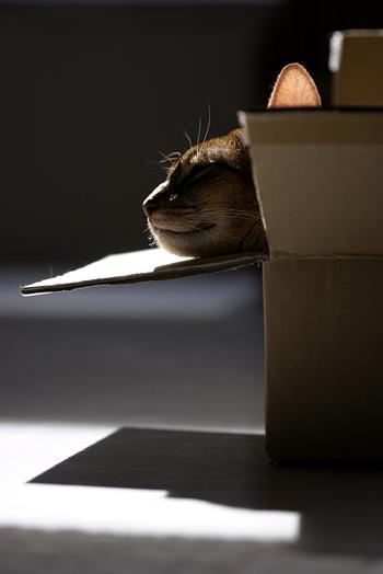 [猫的]顎乗せ_e0090124_824517.jpg