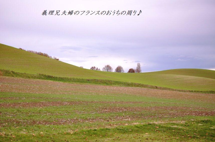 南仏でハッピークリスマス☆_d0104926_7131527.jpg