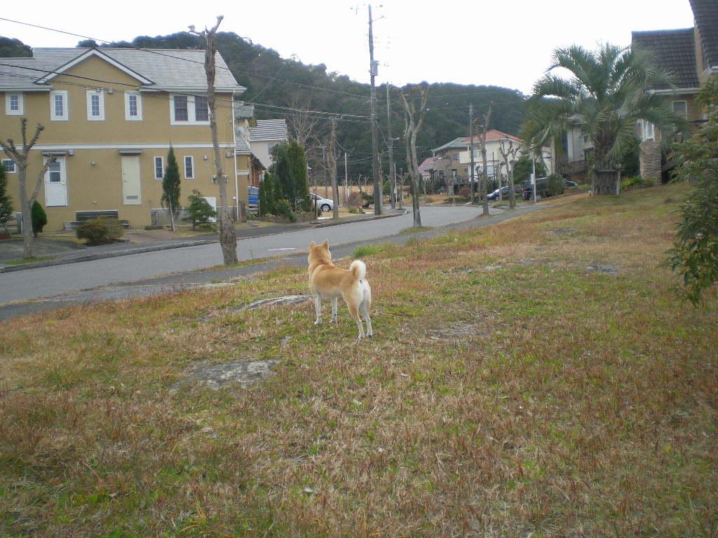 2009年12月28日(月)愛ちゃんの逃亡劇!_f0060461_1159398.jpg