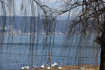 諏訪湖の主役たち_d0021969_104529.jpg