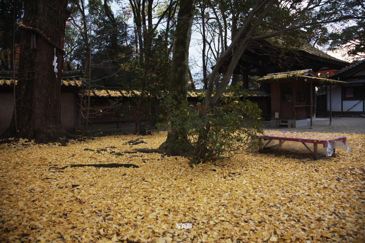 京都 糺の森 河合神社  1_f0021869_7174879.jpg