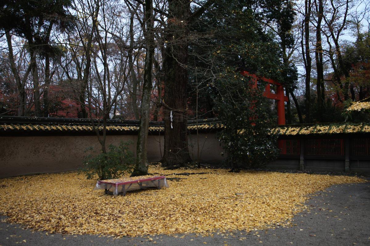 京都 糺の森 河合神社  1_f0021869_7181166.jpg