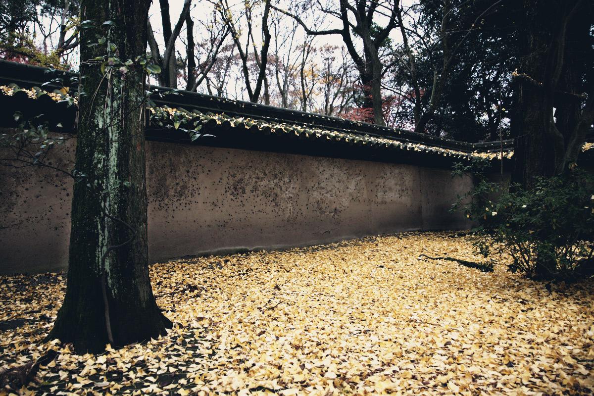 京都 糺の森 河合神社  1_f0021869_7183456.jpg