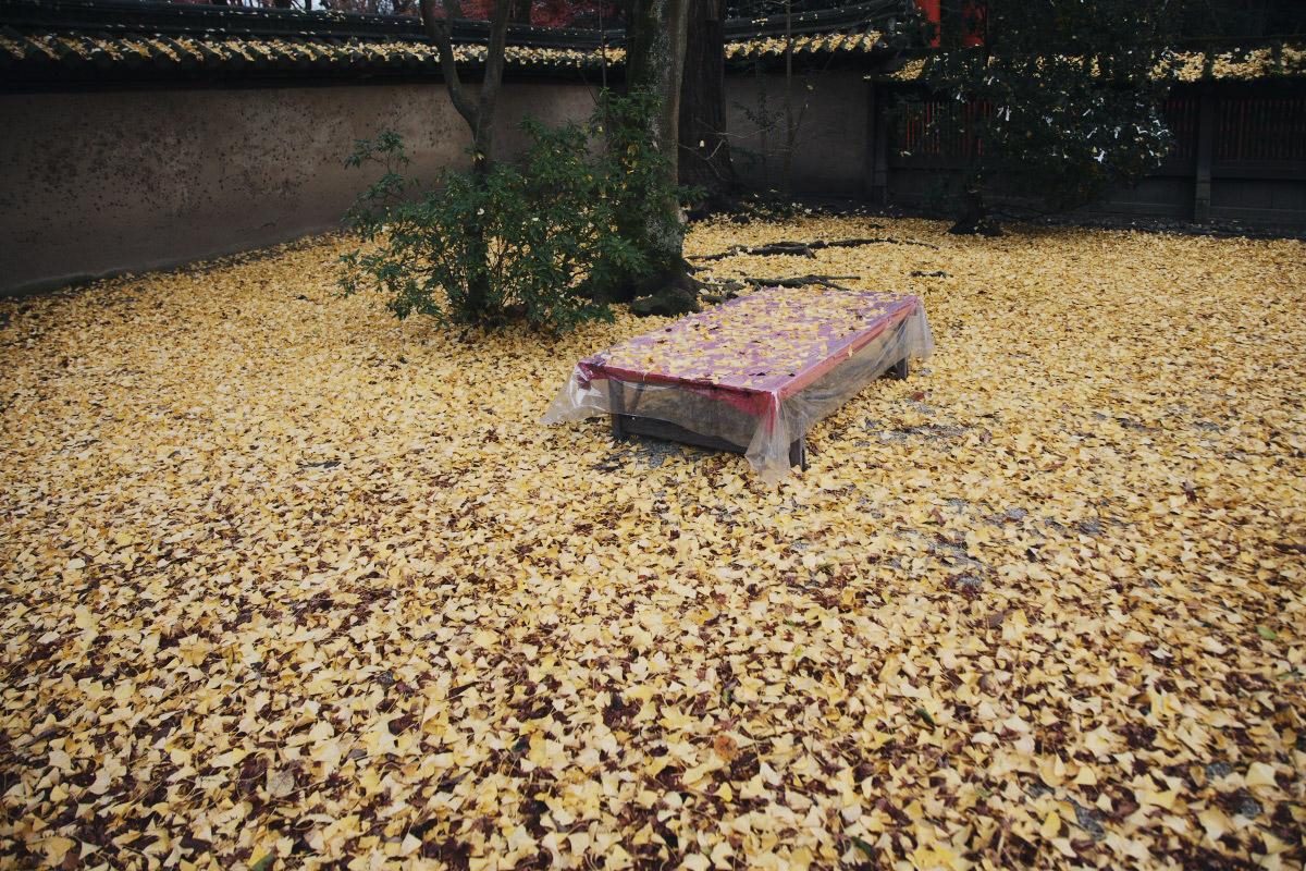 京都 糺の森 河合神社  1_f0021869_7194068.jpg