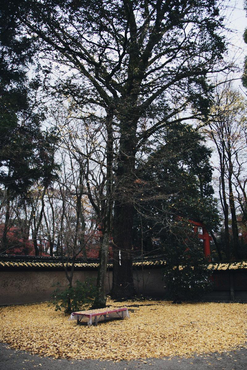 京都 糺の森 河合神社  1_f0021869_7204526.jpg