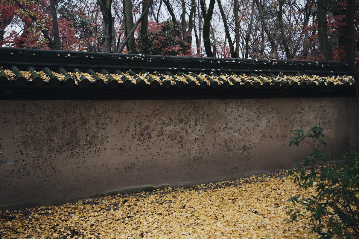 京都 糺の森 河合神社  1_f0021869_720633.jpg