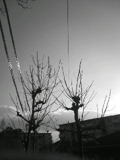 f0100480_16172748.jpg