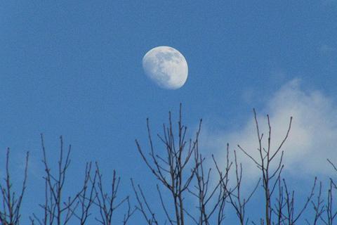 ゼラニュームと、昼の月_f0030085_21533297.jpg
