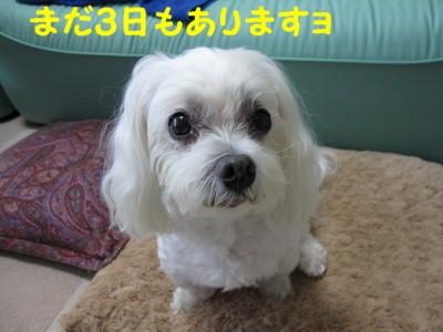 f0145192_12124864.jpg