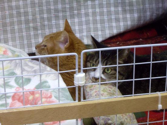ネコのオチルバン_a0136293_1955710.jpg