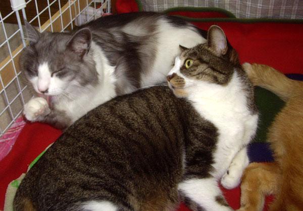 ネコのオチルバン_a0136293_1971619.jpg