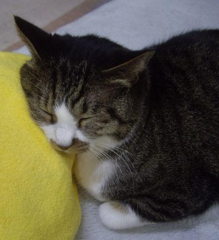 ネコのオチルバン_a0136293_1975146.jpg