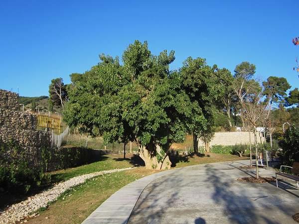 サリア地区の新しい公園 Parc de Joan Reventos_b0064411_9243498.jpg