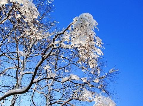 2009年12月29日(火):また除雪_e0062415_1753915.jpg