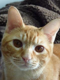 猫のお友だち カイくん編。_a0143140_2312823.jpg