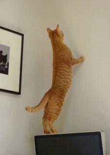 猫のお友だち カイくん編。_a0143140_2317435.jpg